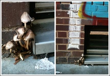 Pilze in der Wohlwillstraße